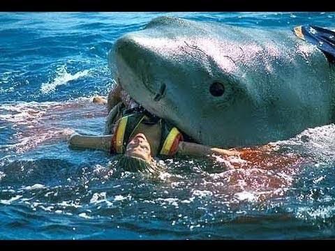 بالصور صور سمك القرش , من اخطر الحيوانات البحريةخطورة سمكة القرش 4176 9