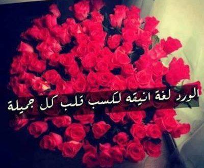 صورة شعر عن الورد , اجمل الاشعار عن الورود