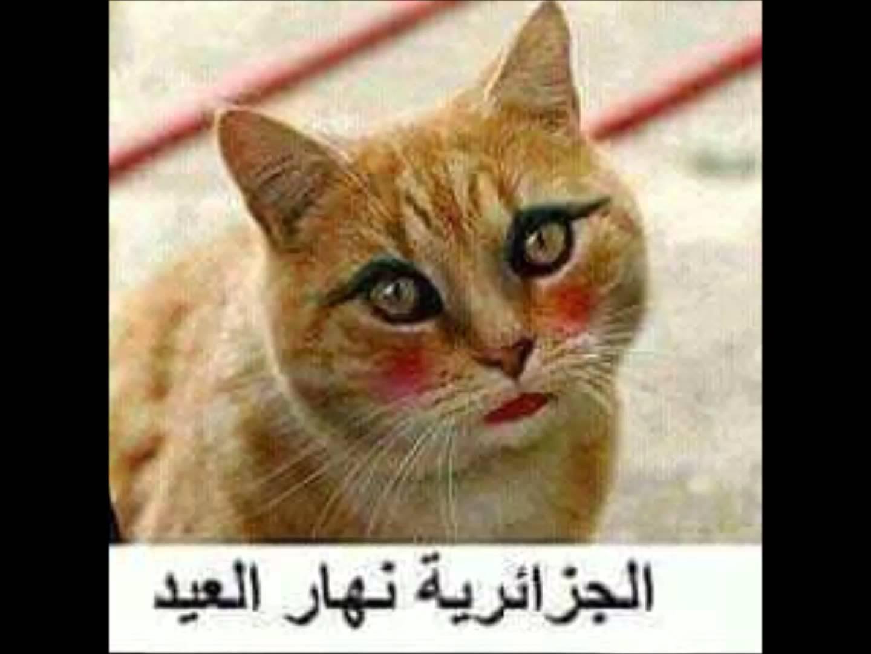بالصور صور مضحكة جزائرية , اجمل صور تجعلك تموت من الضحك 6242 1