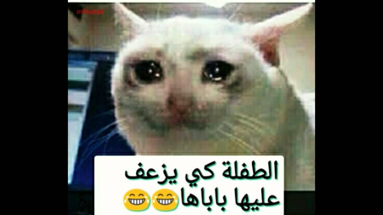 بالصور صور مضحكة جزائرية , اجمل صور تجعلك تموت من الضحك 6242