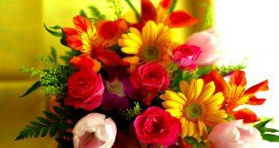 صوره زهور جميلة , من يعشق الزهور يعرف قيمتها