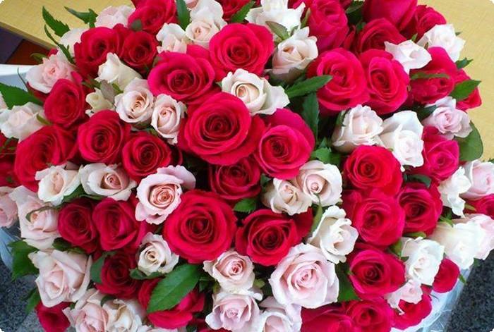 بالصور اجمل ورود الحب , اروع دليل لاثبات حبك للحبيب 6418 3