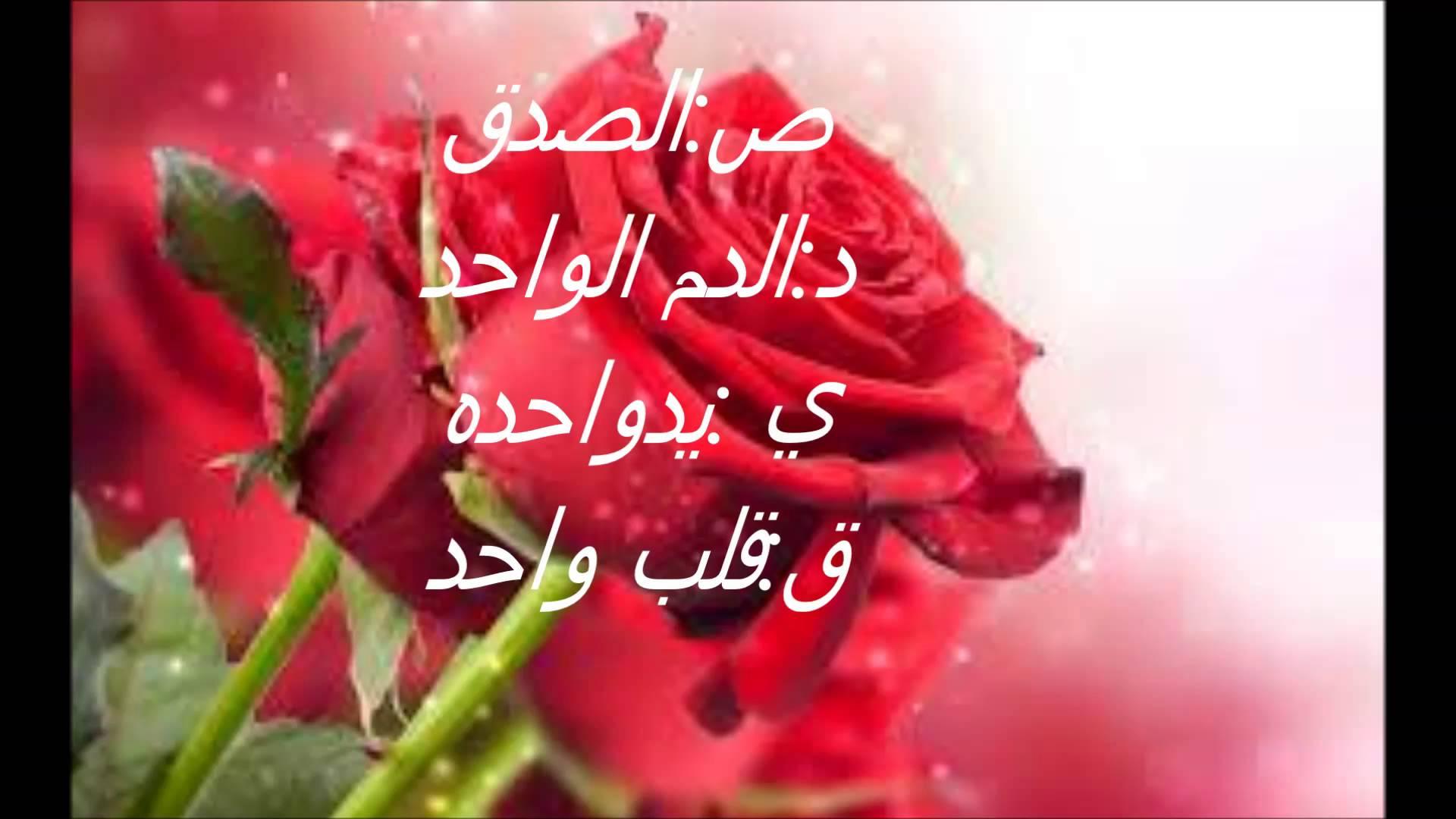 بالصور كلمات عن الورد , عبارات تفوح بالعطور 6561 2