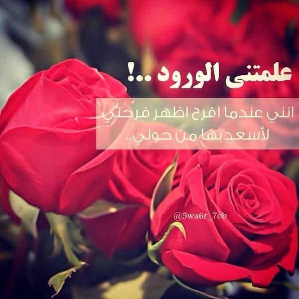 بالصور كلمات عن الورد , عبارات تفوح بالعطور 6561 5