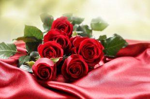 صورة خلفيات ورود جميلة جدا , جدا رائعة هالخلفيات الوردية