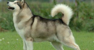 صورة انواع الكلاب , اشهر انواع الكلاب