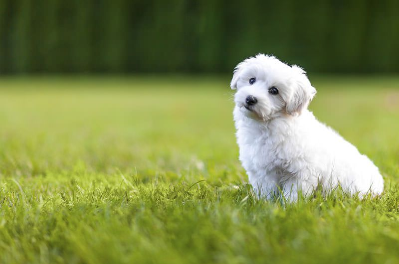 بالصور انواع الكلاب , اشهر انواع الكلاب 699 5