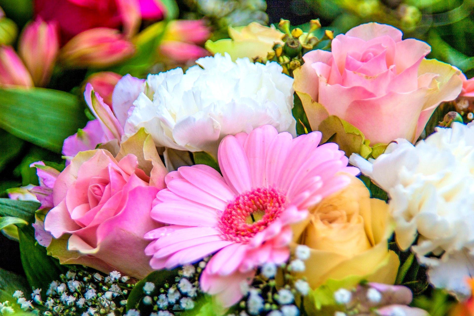 بالصور ورود جميلة , اجمل الورود و الذهور الرائعه 765 1