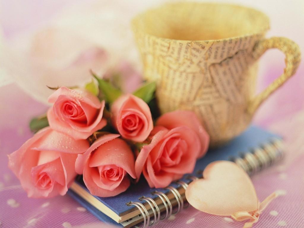 بالصور ورود جميلة , اجمل الورود و الذهور الرائعه 765 12