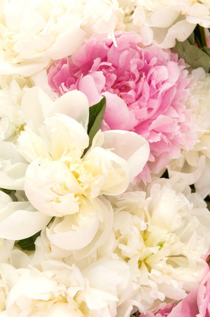 بالصور ورود جميلة , اجمل الورود و الذهور الرائعه 765 13