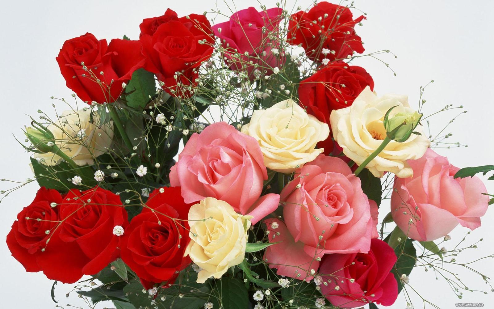 بالصور ورود جميلة , اجمل الورود و الذهور الرائعه 765 4