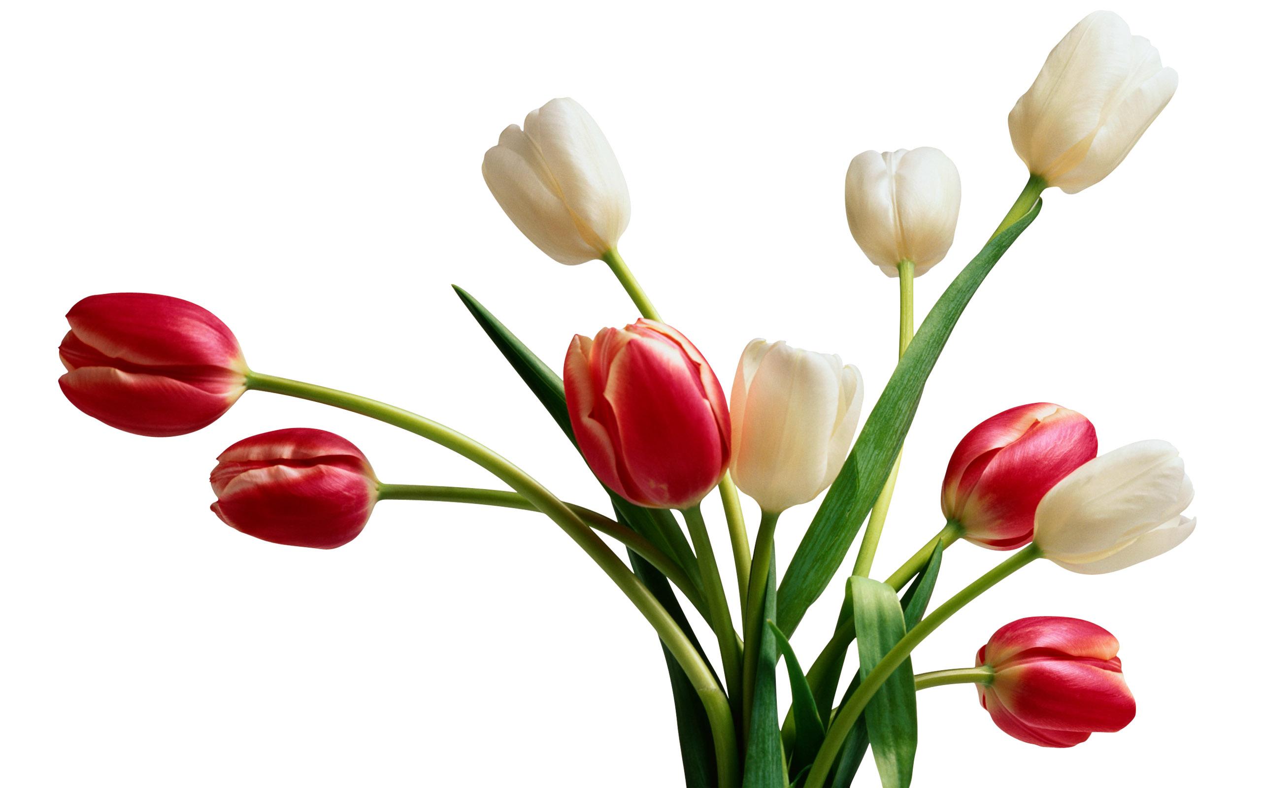بالصور ورود جميلة , اجمل الورود و الذهور الرائعه 765 6