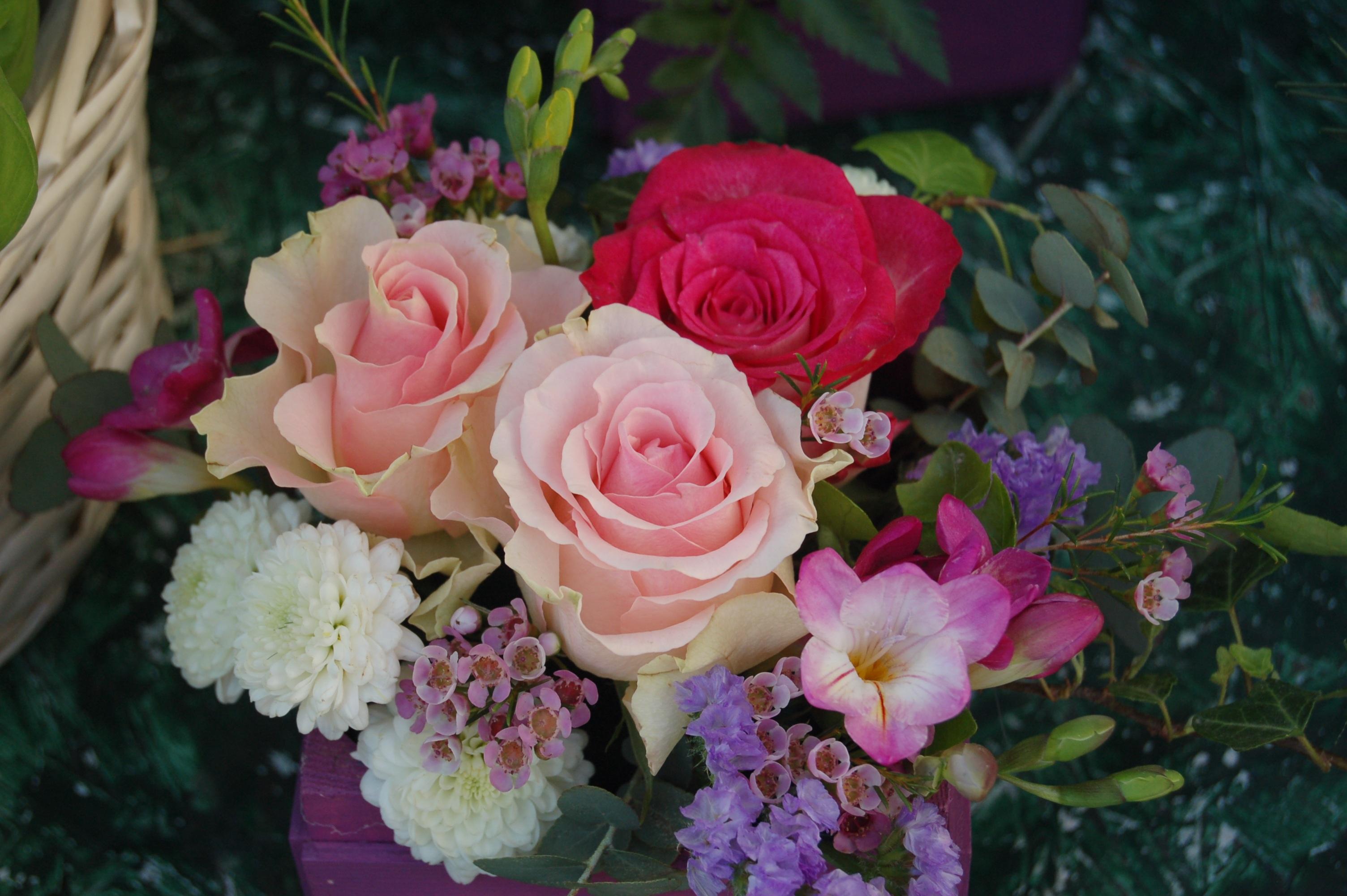 بالصور ورود جميلة , اجمل الورود و الذهور الرائعه 765