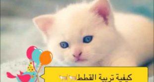 صوره كيفية تربية القطط , بعض المعلومات عن كيفية التعامل مع القطط و تربيتها