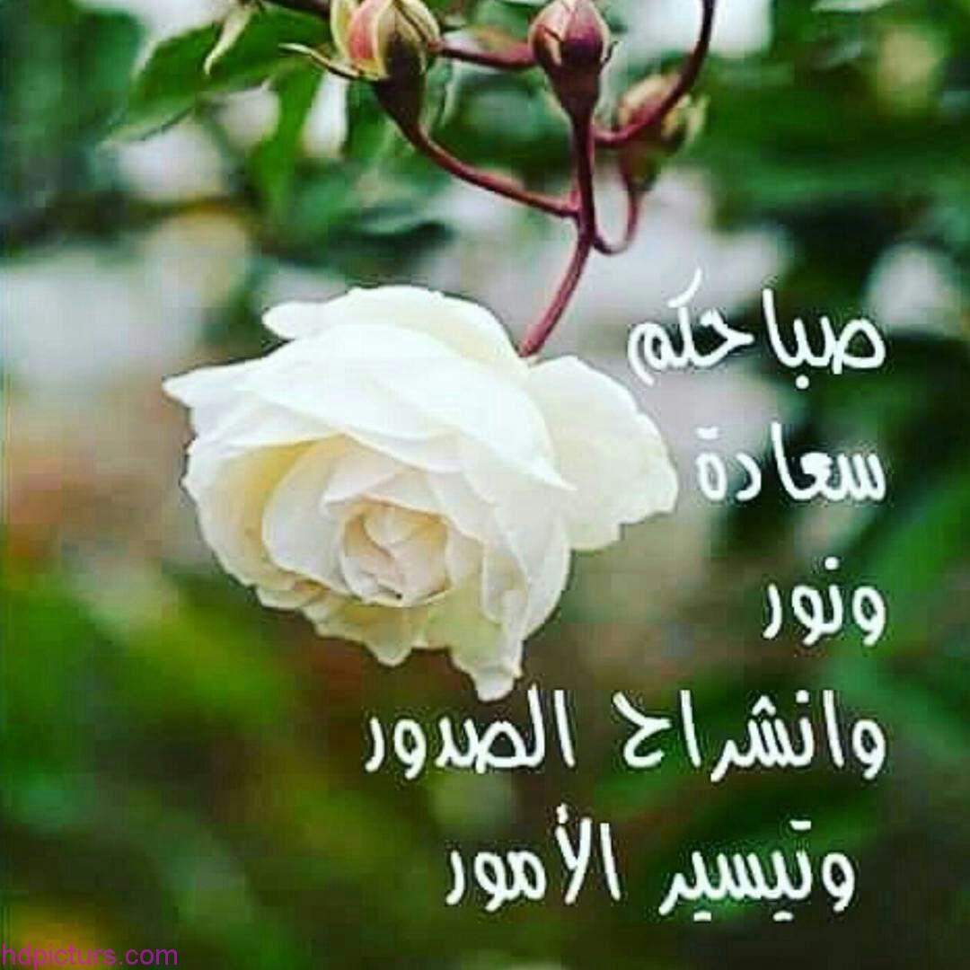 بالصور صور عن صباح الخير , لافتات جميله تحمل عبارة صباح الخير 795 10