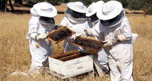 بالصور تربية النحل , كيفية تربية النحل و انتاج العسل 896 3 310x165