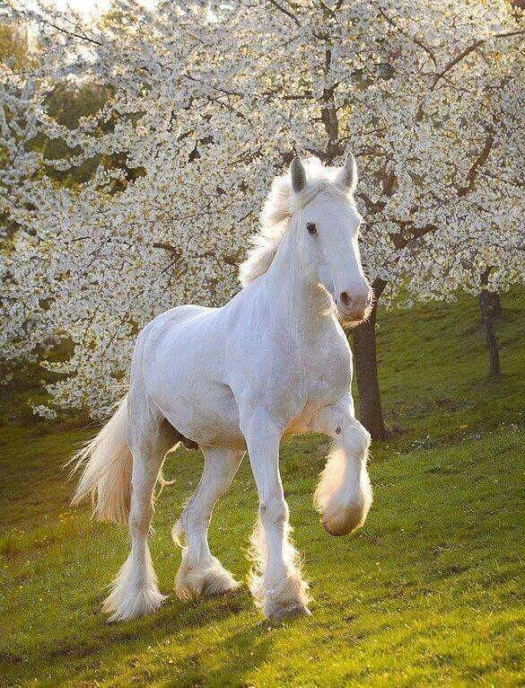 بالصور حصان عربي , شاهد جمال الحصان الاصيل 6499 9