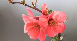 صوره صور زهور , اجمل الازهار الطبيعيه