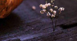 صورة خلفيات جميلة للواتس اب , اجدد الخلفيات المميزة الساحرة