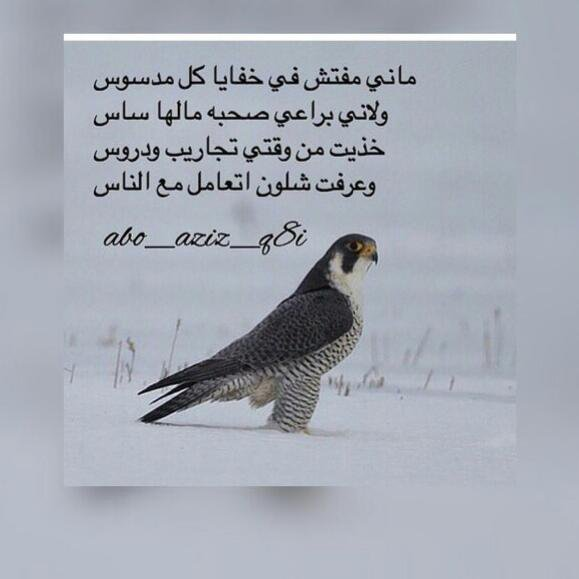 بالصور قصايد روعه , اجمل قصيدة معبرة عن الحياة 6706 5