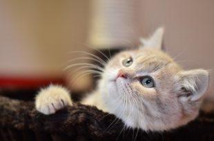 صوره صور قطط صغيرة , كوليكشن قطط فائقه الجمال