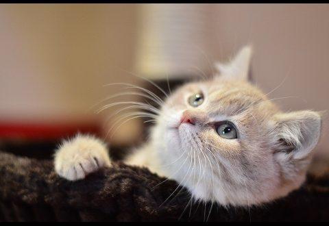 صورة صور قطط صغيرة , كوليكشن قطط فائقه الجمال