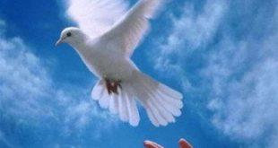 بالصور صور عن السلام , كوليكشن بطعم السلام والوئام 4786 13 310x165