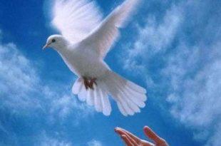 صوره صور عن السلام , كوليكشن بطعم السلام والوئام