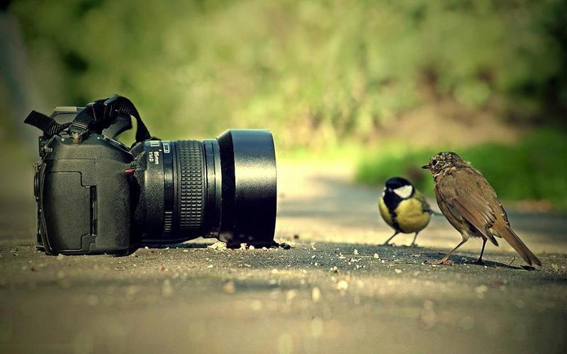 بالصور اجمل تصوير فوتوغرافي , افضل اللقطات الفوتوجرافية واروعها 12097 5