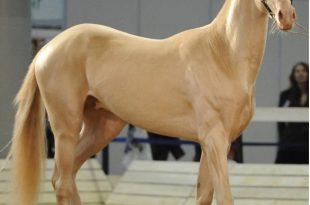 صورة صور اجمل حصان في العالم , لقطات لاحلى حصان عالميا