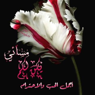 صورة مساء الخير حبيبتي مسجات , اجمل رسايل مسائية للحبيبة