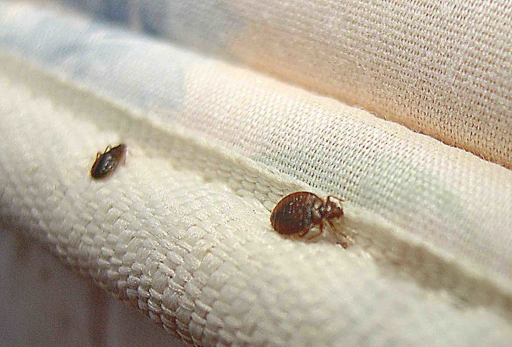 بالصور حشرات غريبة في المنزل , اغرب الحشرات الموجودة في البيت 12217 12