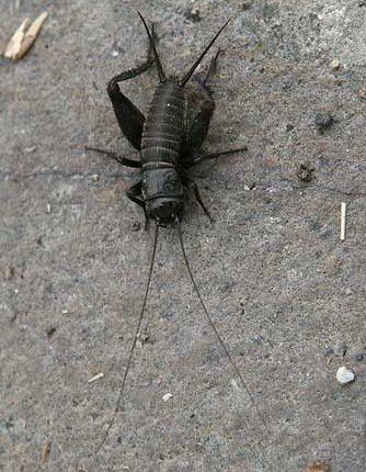 بالصور حشرات غريبة في المنزل , اغرب الحشرات الموجودة في البيت 12217 6