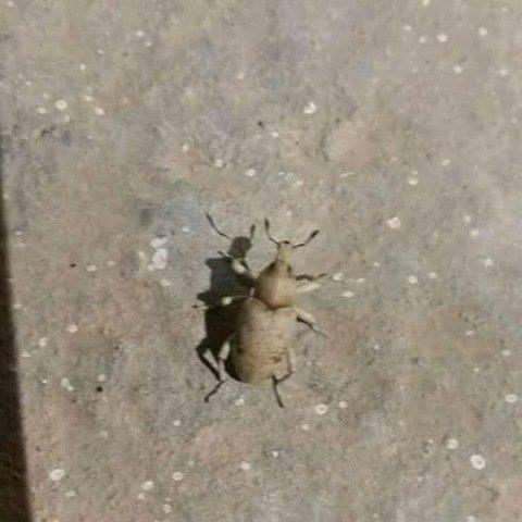 بالصور حشرات غريبة في المنزل , اغرب الحشرات الموجودة في البيت 12217 8