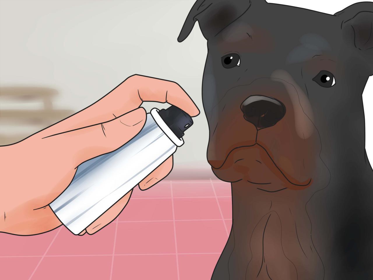 صورة علاج تساقط شعر الكلاب , الحل الوحيد لمكافحة سقوط شعر الكلاب