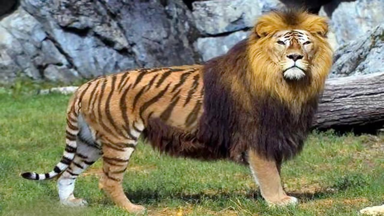 صورة التهجين عند الحيوانات , ماذا يعني التهجين عند الحيوان