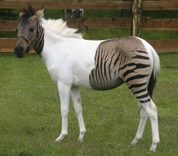 صور التهجين عند الحيوانات , ماذا يعني التهجين عند الحيوان