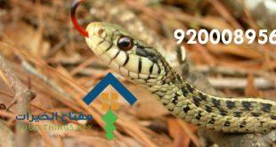 بالصور شركة مكافحة ثعابين بالرياض , شركات خاصة للقضاء على الافاعي بالرياض 12417 2 310x165