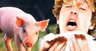 صورة علاج انفلونزا الخنازير , حلول للقضاء على انفلونزا الخنازير