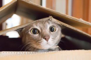 صور تفسير حلم عض القطه , رؤية القطة تعض في المنام