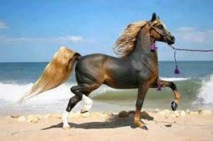 صور اجمل خيول في العالم , ما احلى الخيول