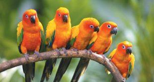 صورة انواع طيور جميلة ومبهرة , الطيور الملونه الساحره سبحان الخالق