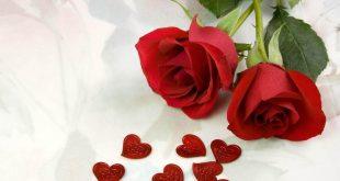 صورة صور ورد صور ورد , اجمل الورود فى العالم
