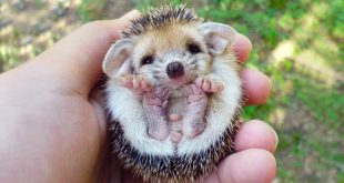 اجمل حيوان في العالم